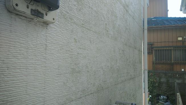 8cc7484734a9479e5bf98e3764dc2340 1 - 家の外壁のコケ(苔)取り・藻の除去の方法徹底調査で最安の方法コレ